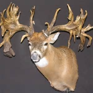 who sells deer antler spray in round rock picture 1