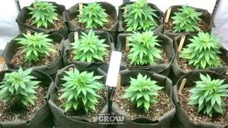 grow smoke picture 6