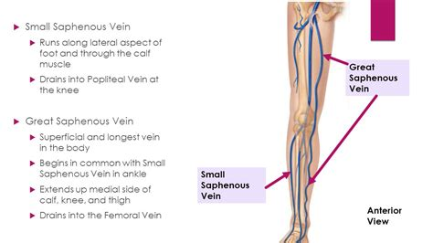 knee joint pain treatment nonsurgical picture 11