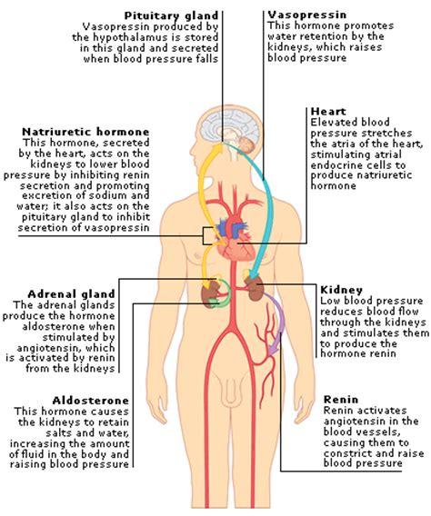 What raises blood pressure picture 1