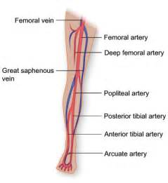 poor blood circulation  upper extremity  forearm picture 9