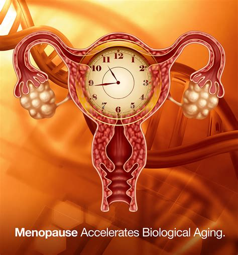 and aging menopause picture 15
