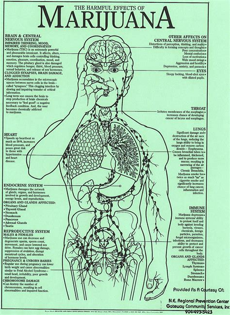effects of k2 on the lungs picture 12