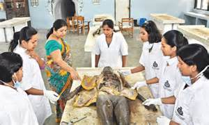 gampaha medicine picture 2
