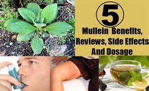 mullein side effects picture 1