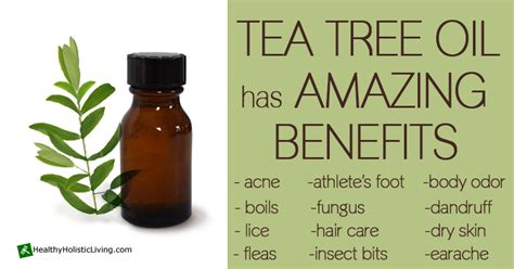 can tea tree oil treat xanthelasma picture 2