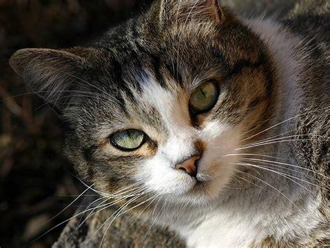 feline picture 6