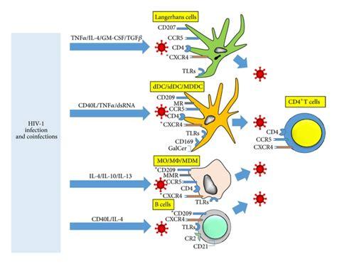 Colonix vs. bowtrol picture 14