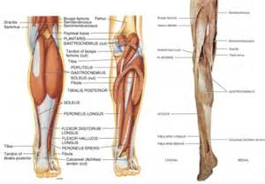 calf muscle strain with popping noise picture 12