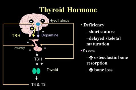 can goiter grow on thyroid hormone picture 3