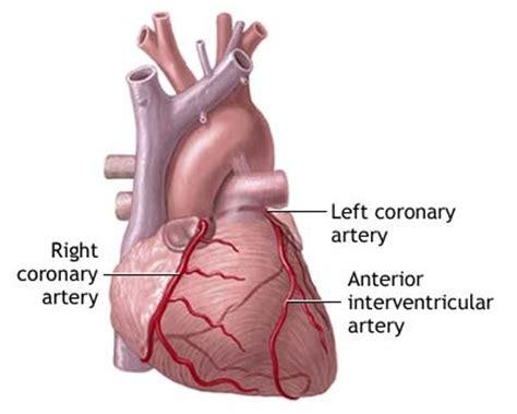 Artichoke cholesterol picture 11