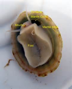 anatomy of the teeth picture 3
