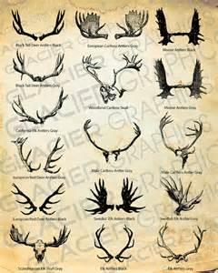 elk deer antlers buy in china picture 2