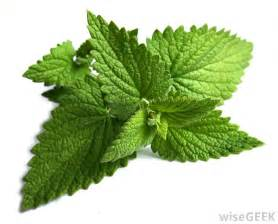 peppermint leaf picture 5