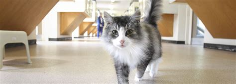 cats health picture 13