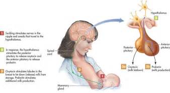 oxytocin smoking how to smoke picture 6