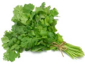cilantro digestion picture 3