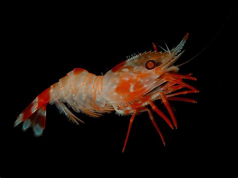 zone diet how many shrimp equal to 1 picture 6