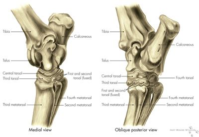 sore muscles before and after the joints picture 3