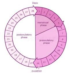 appee suppressant women menstrual cycle picture 7