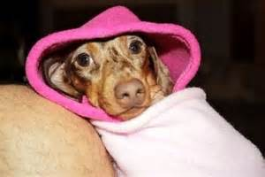 dachshund sleeping bags picture 7