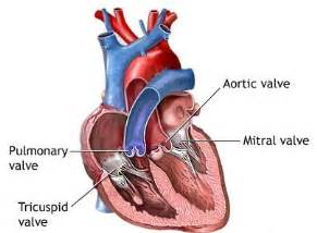 erectile dysfunction and aortic heart valve picture 3