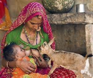deer feeds human breast in india picture 1