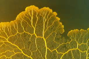 yellow fungus picture 10