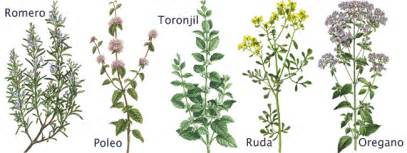 yoruba names for herbs plants and seeds picture 1