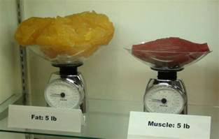 muscle and fat picture 1