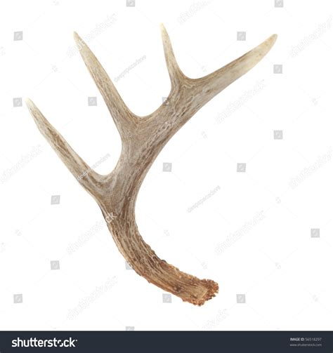 where can i buy bone or antler marijuana picture 7