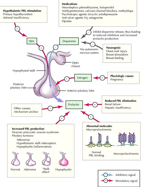 effect of dopamine on libido picture 15