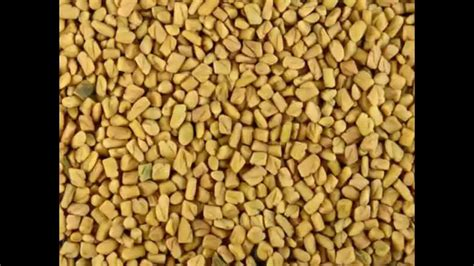 fenugreek increase breast size picture 3