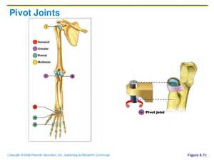 pivot joint picture 6