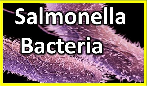 why are we not inundated with bacterial infection picture 15