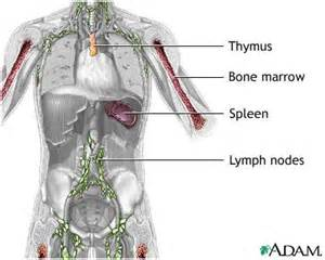 destruction of roots of h by immune system picture 7