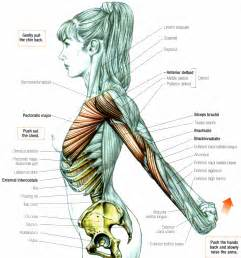 deltoid muscle picture 9
