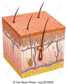 free images of human skin illustration picture 7