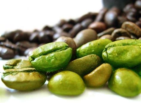 green coffee bean oil picture 9