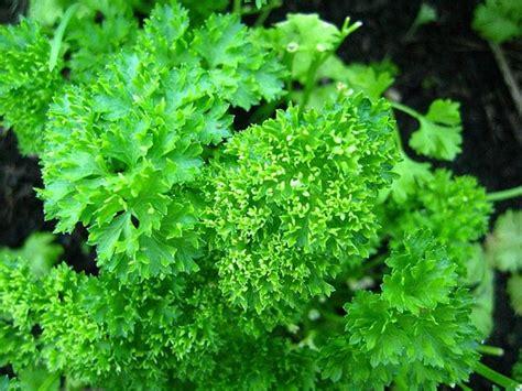 herbs to increase oxytocin picture 2
