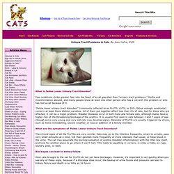 feline bladder disorders picture 14
