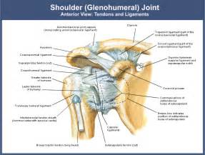 joint pain maryland picture 1