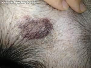feline skin disease picture 2