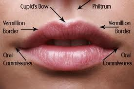 cancer on lips picture 1