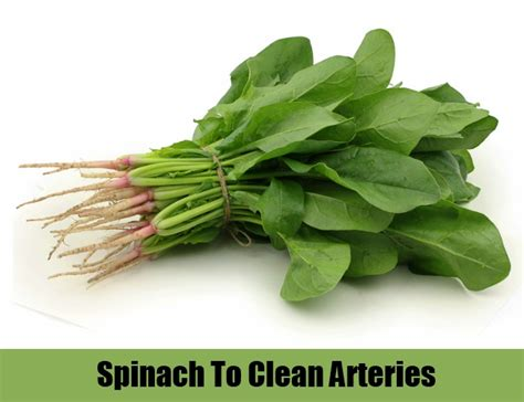 herbs that clean arteries picture 3