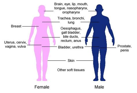 how long does gynaecosid react in woman body picture 5