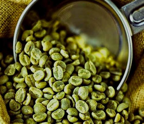top quality green coffee extract picture 6