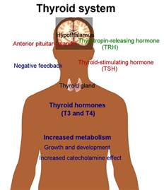 can your body not absorb thyroid picture 2