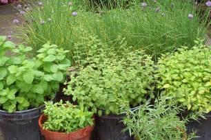 herbal garden picture 2