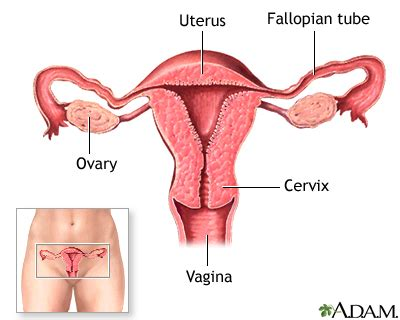 ano ang contraceptive pills na pampataba picture 15